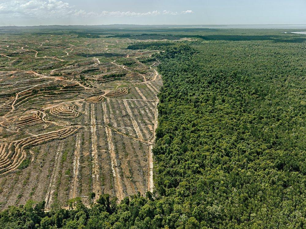 Palm oil destruction of Borneo's forests hindering wildlife cnnservation