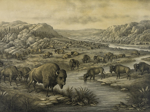 Once rich beyond belief in biodiversity, the Great Plains when used effectively held herds of innumerable bison and other animals. (Photo courtesy Smithsonian Magazine) indigenous peoples' day focus